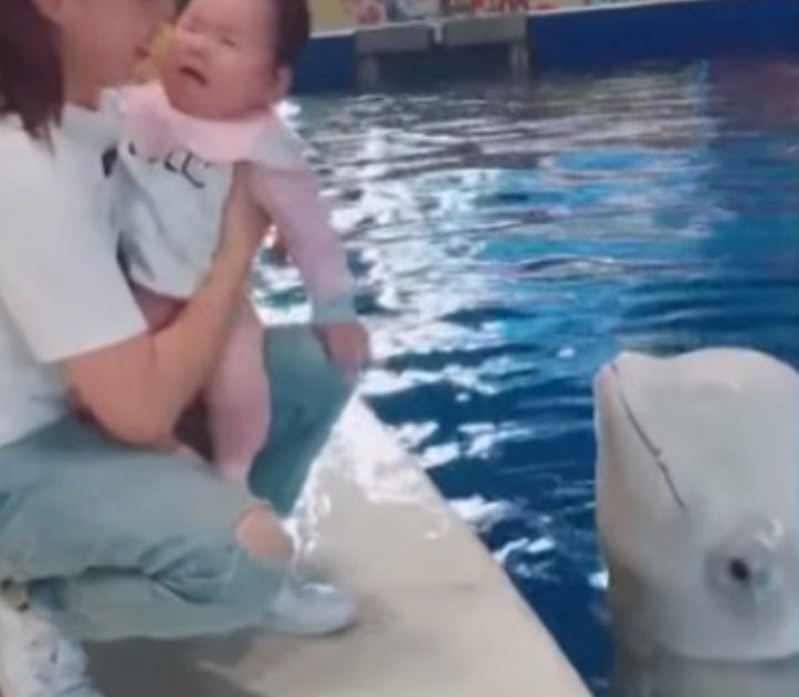 小白鯨熱情獻吻!寶寶卻「崩潰大哭」讓小白鯨心碎:不喜歡嗎?QQ