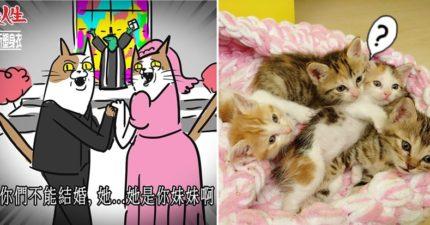 媲美韓劇+八點檔的生育機制 母貓一胎小喵可以「有好幾個爸」