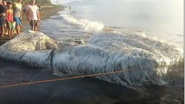 6公尺多毛「海怪」擱淺海灘 官員:一聞就想吐!