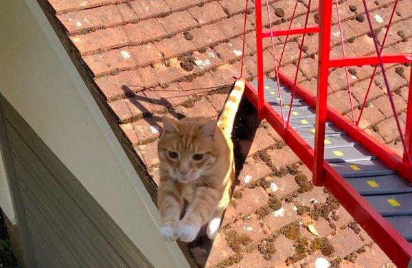 影/愛貓跳屋頂摔下來 主人嚇到蓋「專屬倫敦大橋」網笑:激發奴才超能力