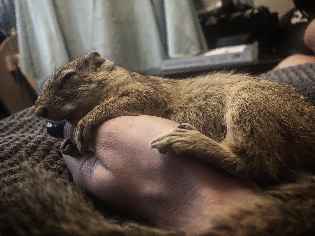 她2年前救了小松鼠野放 1年後帶回「最珍貴禮物」報恩