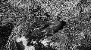 世上最罕見的蠕蟲 除了有貓頭還噴毒氣 目擊者:超可怕