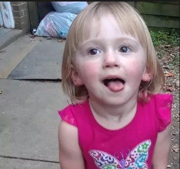 2歲小主人森林失蹤 48小時後搜救人員找到「狗英雄一路相陪」