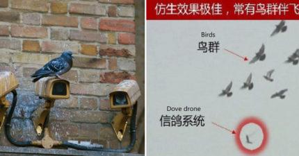 中國派出全新「機器鴿軍團」監控人民 逼真到鴿子也以為是同伴!