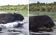 影/大象水中休息 突回頭暴衝「用象鼻狂打遊客船」:給我閃遠點!