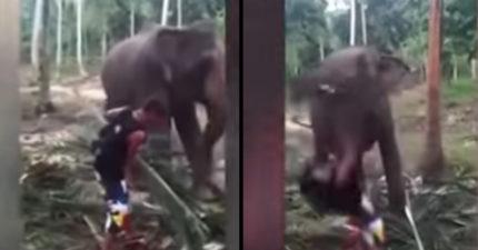 老屁孩「挑釁不讓大象吃飯飯」 象鼻一揮直接後空翻:OMG牠森氣了...
