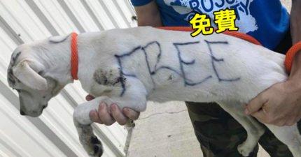 小白狗遭差勁主人關籠棄養 身上被簽字筆寫「免費」!