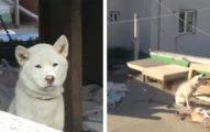 小白好堅強!2狗被大媽關頂樓 隔壁嬸嬸投食物解救「黃狗已經黏地沒動了...」