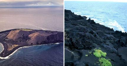 只有科學家才能進入的神祕無人島 竟冒出「詭異新生命」還從便便出來...
