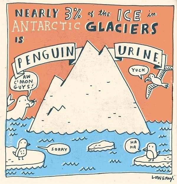 10個「你知道會更有魅力的冷知識」 南極冰山有3%是企鵝的尿