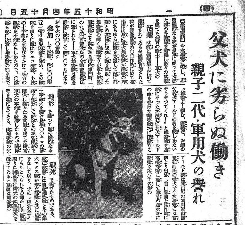 狼犬被軍隊徵召!受訓期間偷溜回家 躲前院車底默默守護家人
