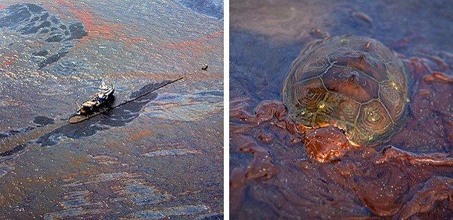 14张「大自然被燃烧殆尽」照片 鲸鱼嘴巴变成人类大型垃圾桶…心好痛! -5b20e06878810
