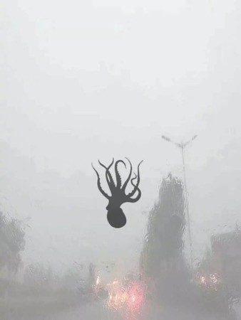 青岛狂下「海鲜雨」 章鱼虾子从天而降上演《食破天惊》! -5b231bc44fd39