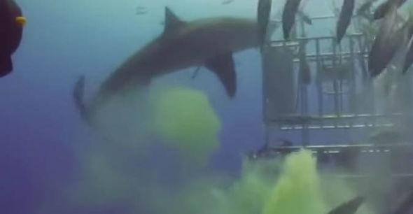 巨鯊被閃光燈嚇到「爆出黃色屁雲」 尷尬狂甩尾:歹勢偶不4故意~