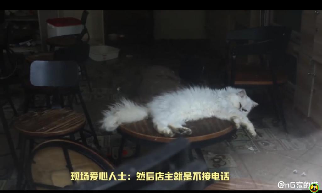 貓咖啡店被斷水斷電 30隻貓「關緊閉等斷氣」路人急:我就隔著玻璃卻救不了