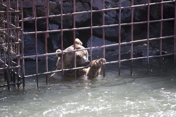 日日面對漲潮恐懼!熊夫妻關水牢10年 遊客「只顧吃飯」讓人心寒