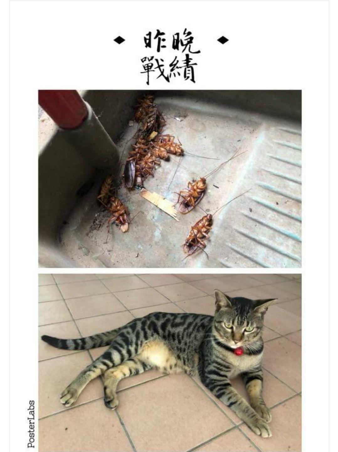 養貓皇終於拿到「貓的報恩禮」 鏟屎官看到水槽11個驚喜...吐慘了!