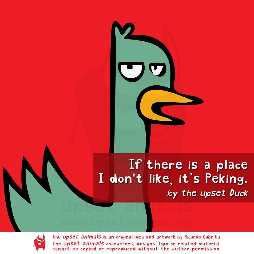 12張「動物比人類更厭世」的悲觀語錄 鴨子討厭北京完全可以理解!