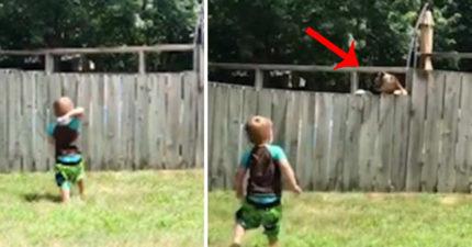 影/沒有東西可以阻擋我們!2歲寶寶「隔著一道牆」和鄰居汪嗨玩丟球