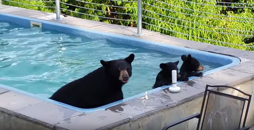 天氣太熱!熊媽天天帶二寶闖後院泳池 泡好泡滿超開薰:蘇湖~