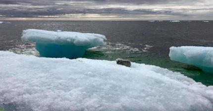 漁夫出海發現「冰山上一坨小小黑影」 靠近一看卻嚇到