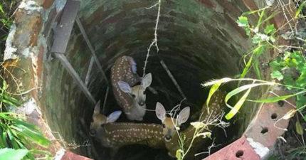 影/森林傳出悲愴低鳴 她走進古井驚見「孤獨鹿媽求救」:我的孩子在下面