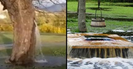 影/神奇海螺OUT!100年神木「狂噴水」 居民以為神蹟...專家:那是雨