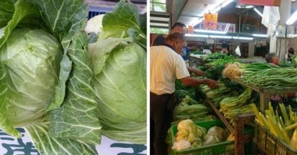 颱風還沒來菜價漲翻天 結帳一看「2顆高麗菜500元」!