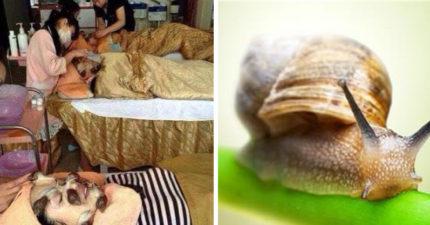 最真實的蝸牛精華液 整臉敷滿「小蝸爬行」連網美都怕了!