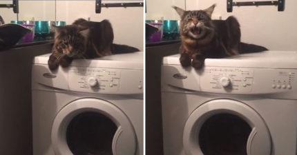 影/洗衣機睡覺結果開始「轟隆隆隆」 貓皇崩潰:拍什麼拍!不快救我下來QQ