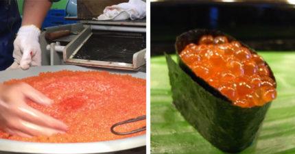 鮭魚「人工受孕」曝光!幫公魚「抓龍筋」成果拌進魚卵攪:無法在吃握壽司了...