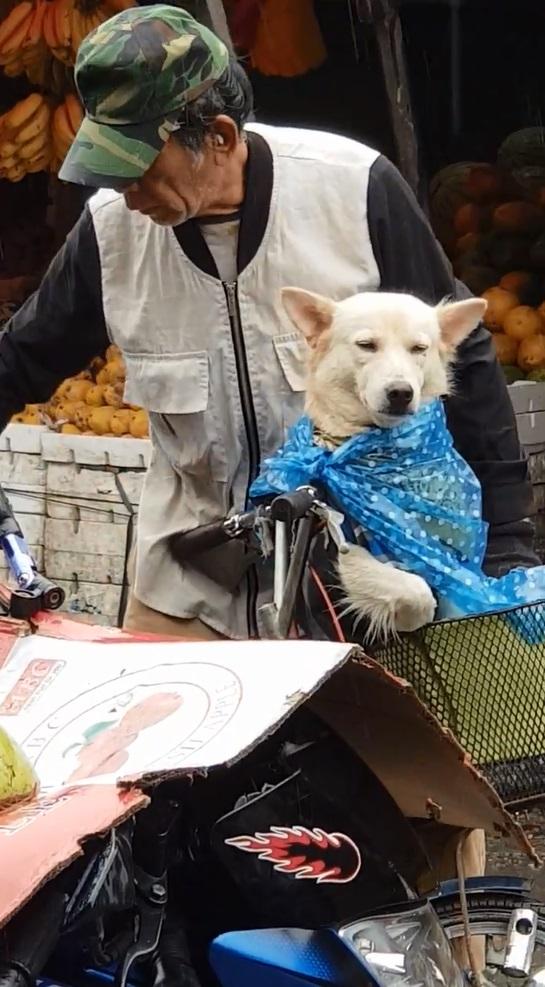 真正的家人!爺爺把狗狗當孩子養 淋雨也要先幫「狗寶貝」穿雨衣❤