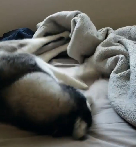 影/傲嬌月月起床沒見老爸 氣PUPU空踢:484在外面有別的狗?