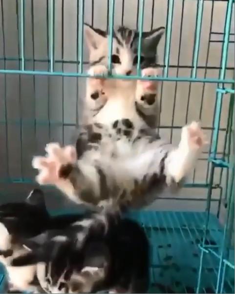 萌貓練G肉吊單槓 瞬間「乳酸堆積」手手撐不住:要屎了...護駕!