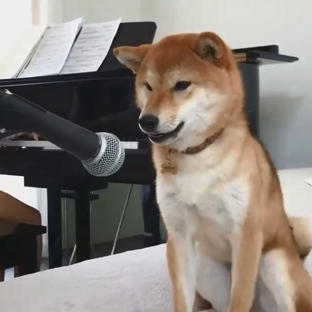 影/主人練鋼琴練到一半... 「歌王柴」急搶麥:這我的歌!
