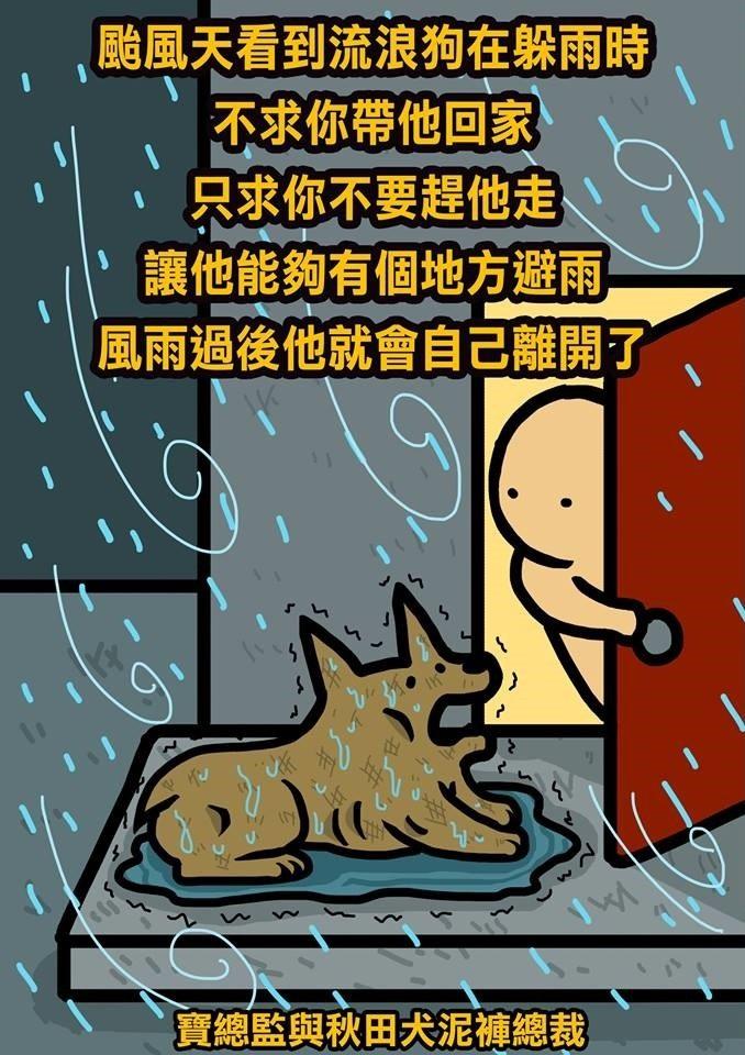 不求你帶回家!讓浪浪在騎樓躲一下颱風吧 風雨後他們會自己離開