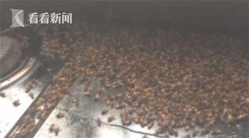 他鐵沙掌殺30隻蜜蜂護老婆 隔天上萬「蜜蜂團隊」衝進家中為伙伴報仇!