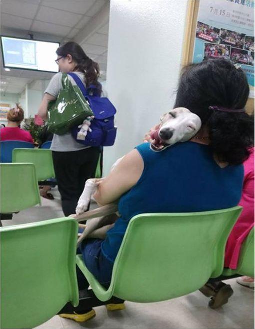 他抱怨大嬸「醫院不能帶狗」 網友看「吐舌ㄎㄧㄤ臉」心軟:太Q了吧