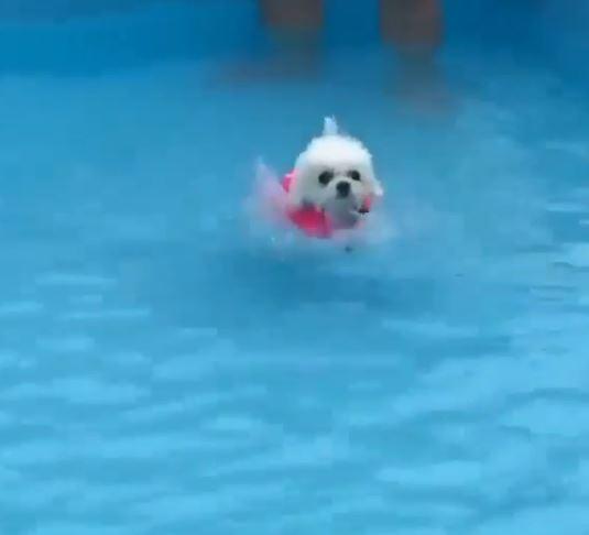 下水前肥腿先變「踩水馬達」 小白臉超認真:媽,我準備好了~