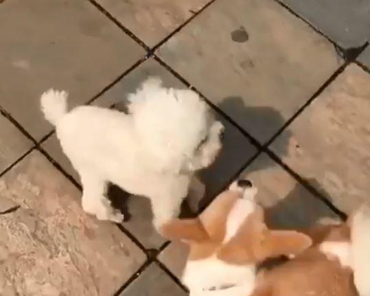 小狗「一言不合就打架」 360度迴旋踢攻擊:知道我的厲害了吧~