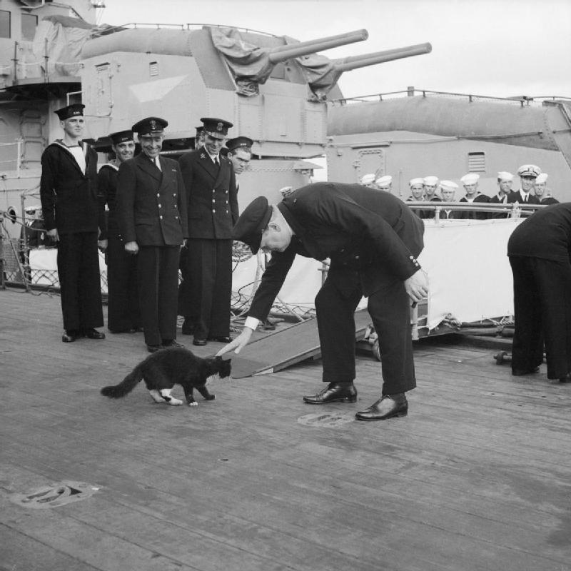 貓咪上船當水手結果「搭過的戰艦全炸沉」 海軍哭哭:下次不用來了QQ