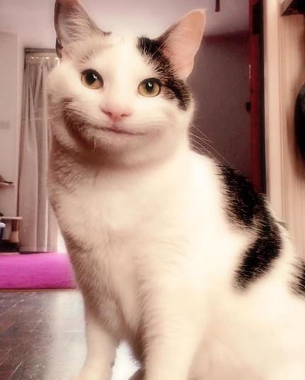 史上尷尬!「乾笑貓」太有禮貌 鏡頭帶近肥臉肉抖2下:Hi~