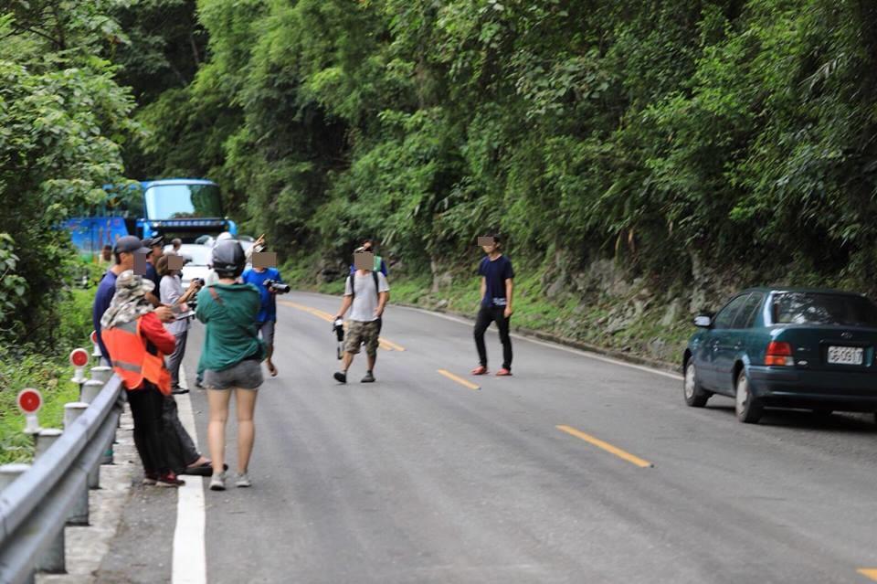 台灣黑熊寶寶走散!驚慌小身影闖花蓮山區馬路 百人追逐打卡嚇跑熊媽