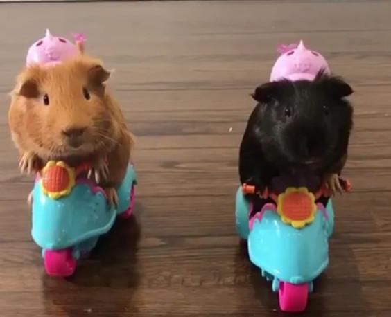 傻萌的「鼠鼠兄弟」8+9尬車 守法戴粉色安全帽:最可愛3寶!