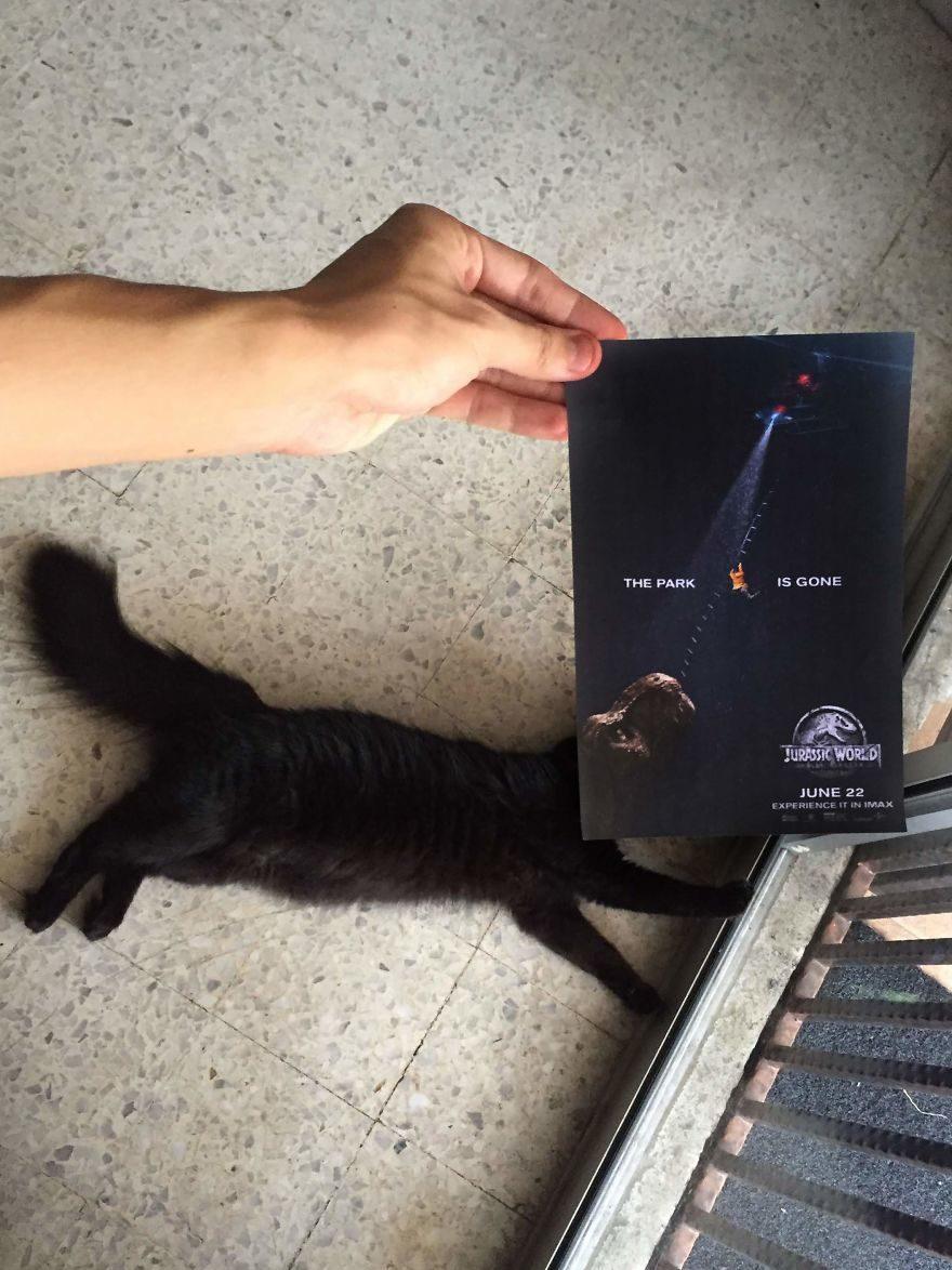 他靈機一動把「喵皇結合電影海報」 《動物方城市》超萌零違和!