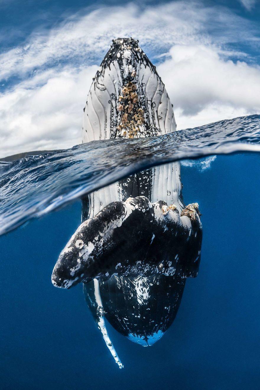 30張海底精采度不輸陸上「2018水下攝影大賽」得獎作品
