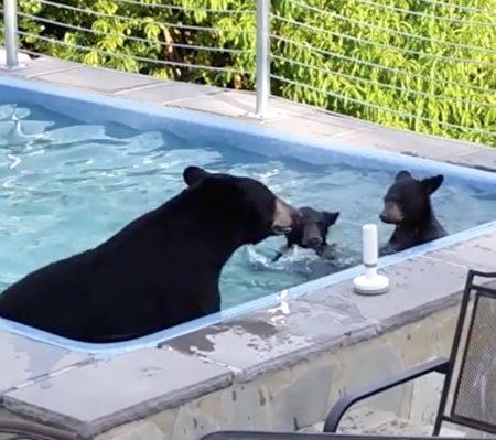 天气太热!熊妈天天带二宝闯后院泳池 泡好泡满超开薰:苏湖~ -5b3f43f762341