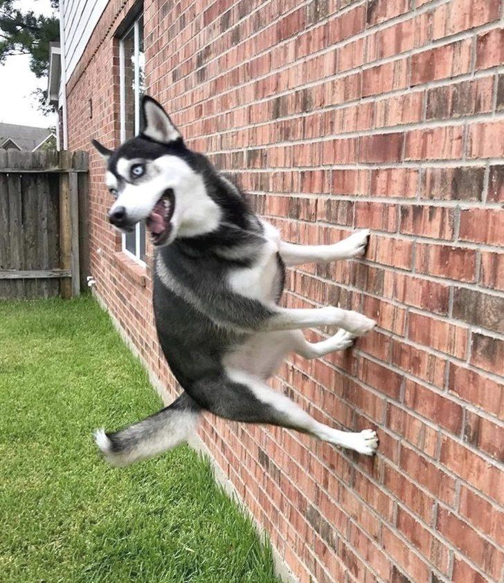 21張「狗狗是治憂鬱最佳良藥」照片 沒有人能阻止偶賣萌~