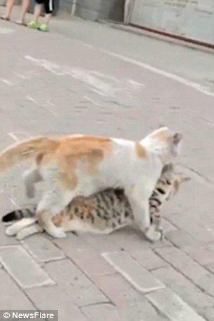 影/虎斑浪浪癱軟在地斷氣 橘貓悲傷「咬起脖子拖走」:兄弟我帶你到安全的地方...
