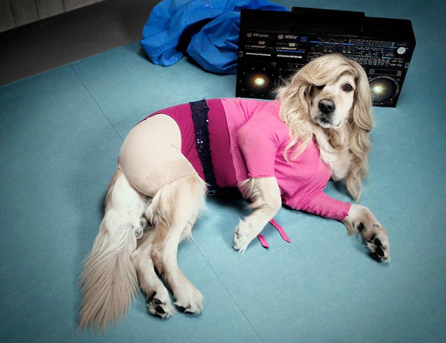 攝影師主人「把狗狗扮成瑪丹娜」 性感嫵媚神情完全狗界天后!